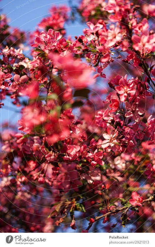 #S# Pink blossom Environment Nature Plant Esthetic Blossom Red Spring Spring fever Versatile Multicoloured Bushes Tree Almond blossom Blossom leave Colour photo