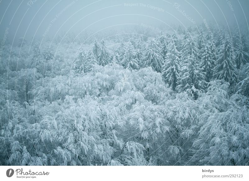 winter dress Nature Winter Fog Ice Frost Snow Forest Authentic Infinity Cold Beautiful Blue Calm Peace Idyll Climate Perspective Environment Change Treetop