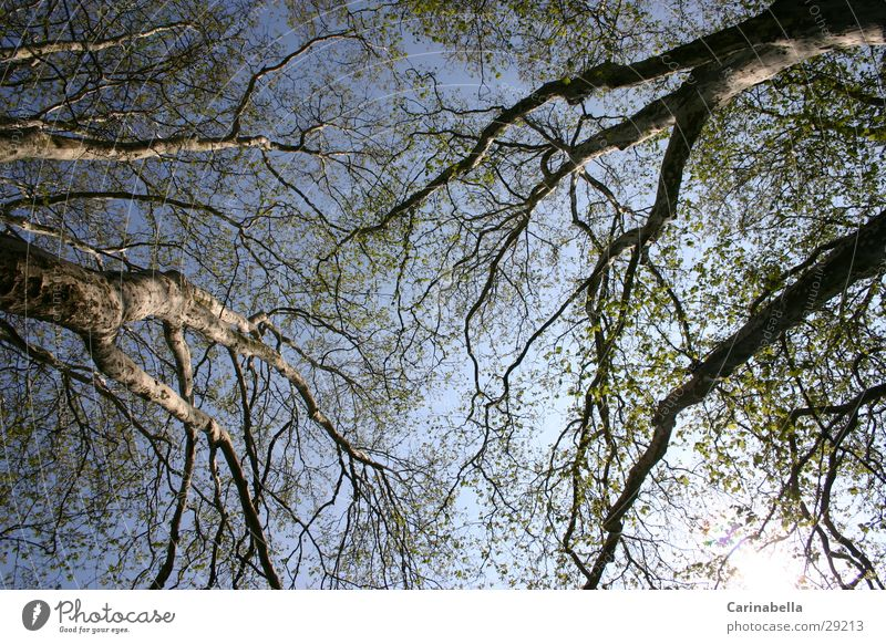 Sky Tree Wood Branch Tree trunk Treetop