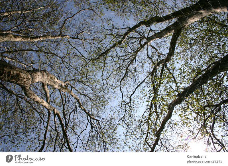 Tree II Treetop Wood Tree trunk Branch Sky