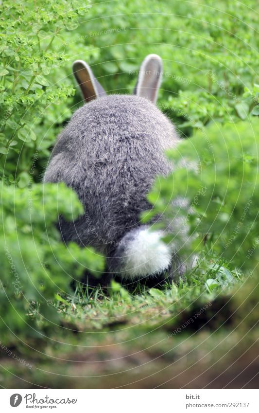 Plant Animal Environment Meadow Happy Feasts & Celebrations Garden Field Wild animal Fresh Cute Soft Easter Pelt Pet To feed