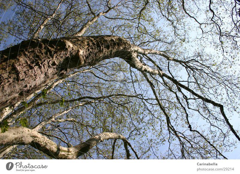 Tree I Treetop Wood Tree trunk Branch Sky