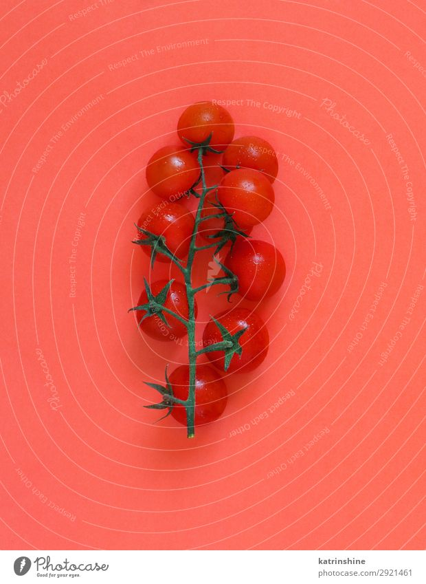 Cherry tomatoes on a coral red background Red Above Bright Fresh Vegetable Vegetarian diet Diet Vegan diet Conceptual design Ingredients Minimalistic Raw