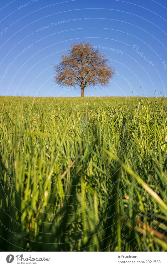 Single tree on a pasture Vacation & Travel Trip Sky Spring Beautiful weather Plant Tree Meadow Field Fresh Positive Green Pasture Individual 1 Fruit trees
