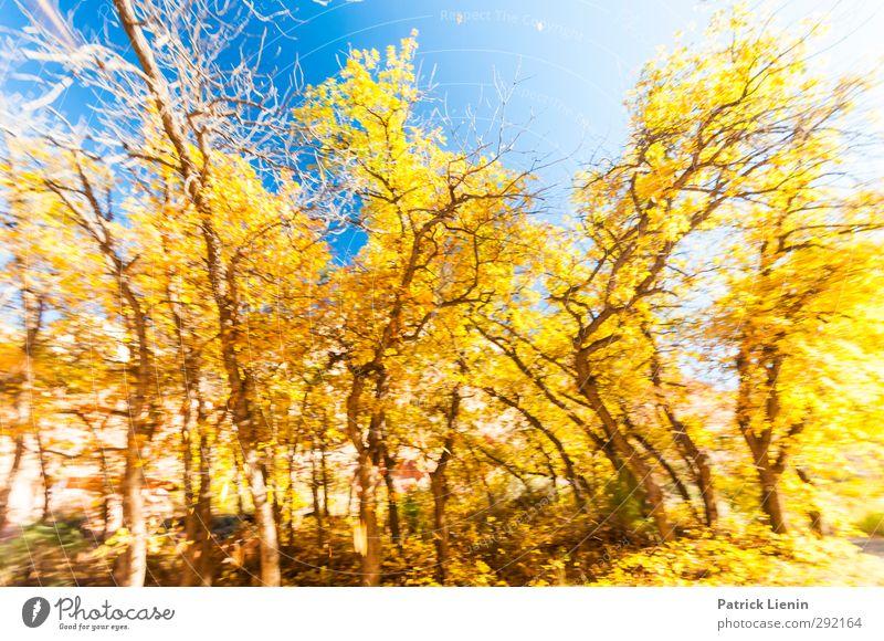 Indian buzzer Environment Nature Landscape Plant Elements Climate Weather Forest Movement Colour photo Multicoloured Exterior shot Day