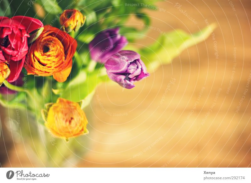 Plant Green Red Yellow Warmth Spring Orange Living or residing Esthetic Blossoming Romance Friendliness Violet Bouquet Tulip Spring fever