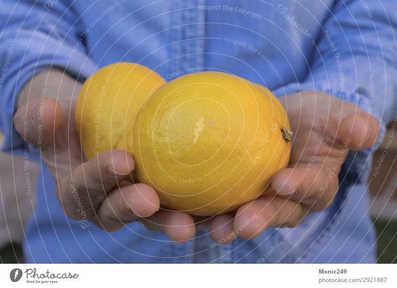 Human hands offering lemons Woman Human being Blue Hand Lifestyle Adults Yellow Natural Feminine Fruit Nutrition Fresh Fitness Fingers Delicious Dessert