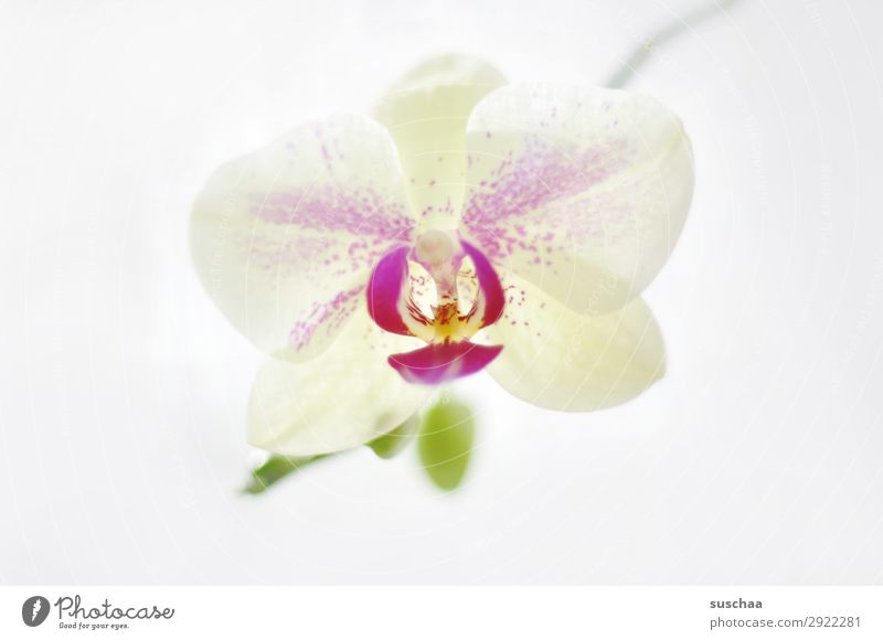 Through the flower Flower Orchid Plant Nature Beautiful Wellness Healthy Bright Soul Meditation Spa Romance Delicate Harmonious Exotic Neutral Background