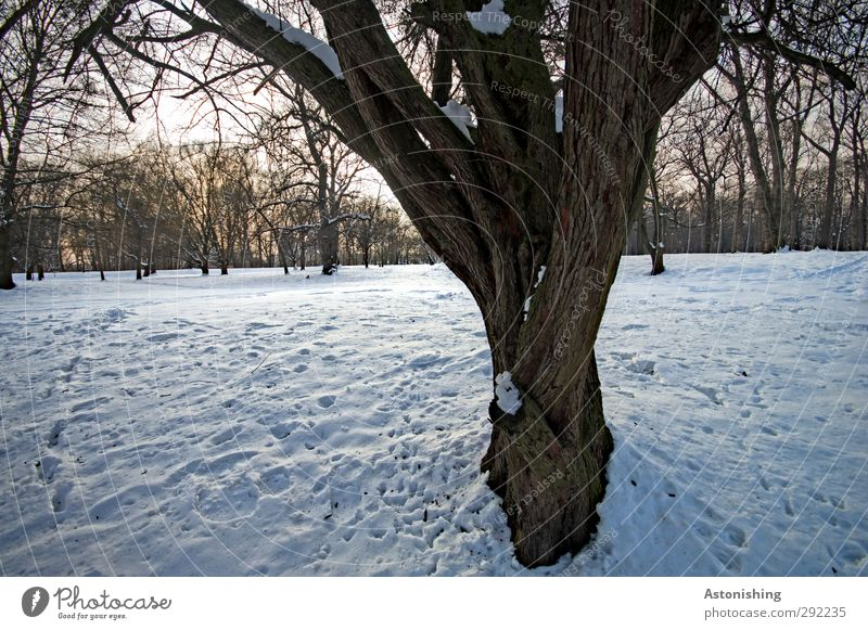 ramified Environment Nature Landscape Plant Air Sky Horizon Sun Winter Weather Beautiful weather Ice Frost Snow Tree Park Meadow Forest Wood Stand Blue Brown
