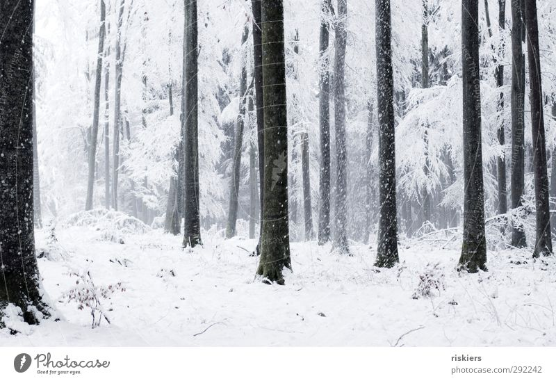 so must winter!! Environment Nature Elements Winter Weather Beautiful weather Fog Snow Snowfall Forest Black White Emotions Calm Idyll Cold Colour photo