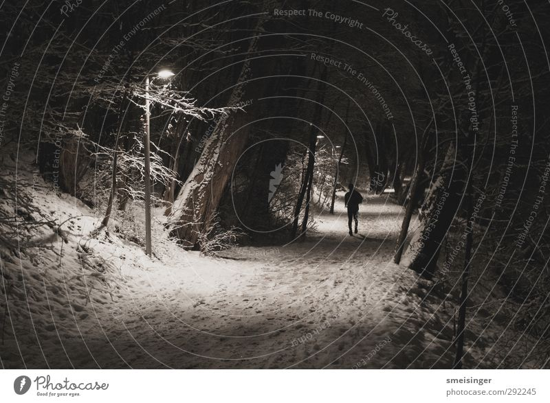Jogger in the snow at night Sports Fitness Sports Training Jogging Human being 1 Winter Snow Tree Park Walking Athletic Authentic Dark Free Cold White Resolve