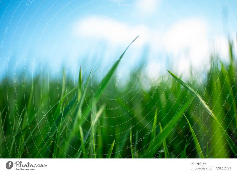 Juicy green meadow blue sky in spring Healthy Alternative medicine Wellness Relaxation Vacation & Travel Summer Environment Nature Landscape Sky Sun Climate