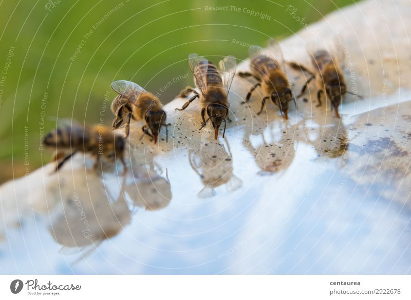 Nature Water Animal Environment Garden Contentment Wild animal Group of animals Delicious Drinking Attachment Network Bee Diligent Hospitality