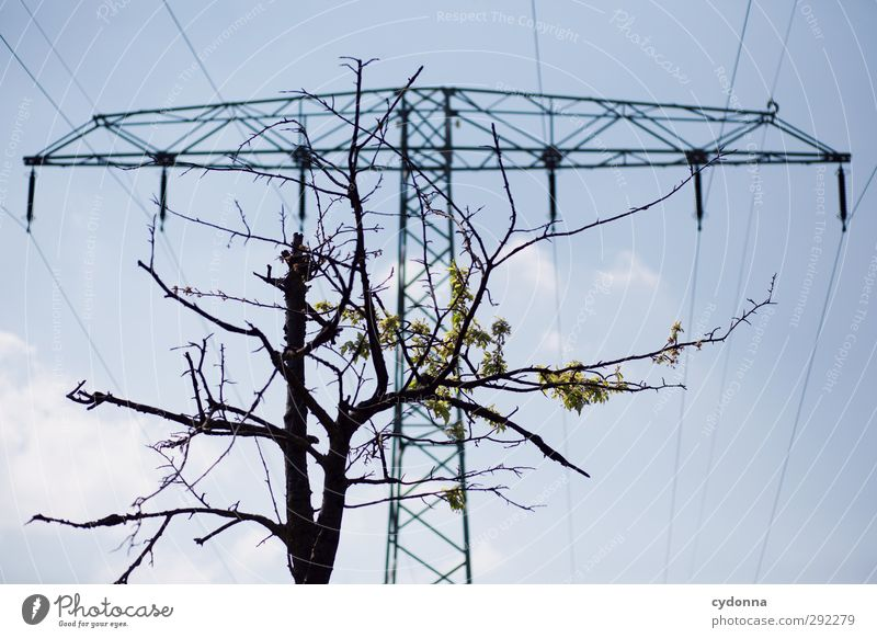 Nature Tree Environment Life Spring Energy industry Growth Future Esthetic Electricity Planning Threat Change Idea Advice