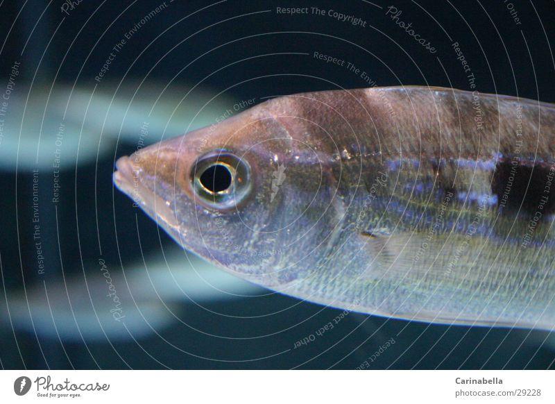 Water Fish Aquarium