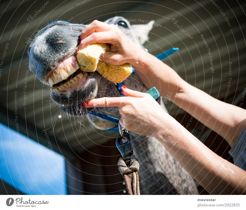 Beautiful Sun Animal Healthy Face Eating Spring Health care Gray Leisure and hobbies Happiness Success Authentic Friendliness Agriculture Horse