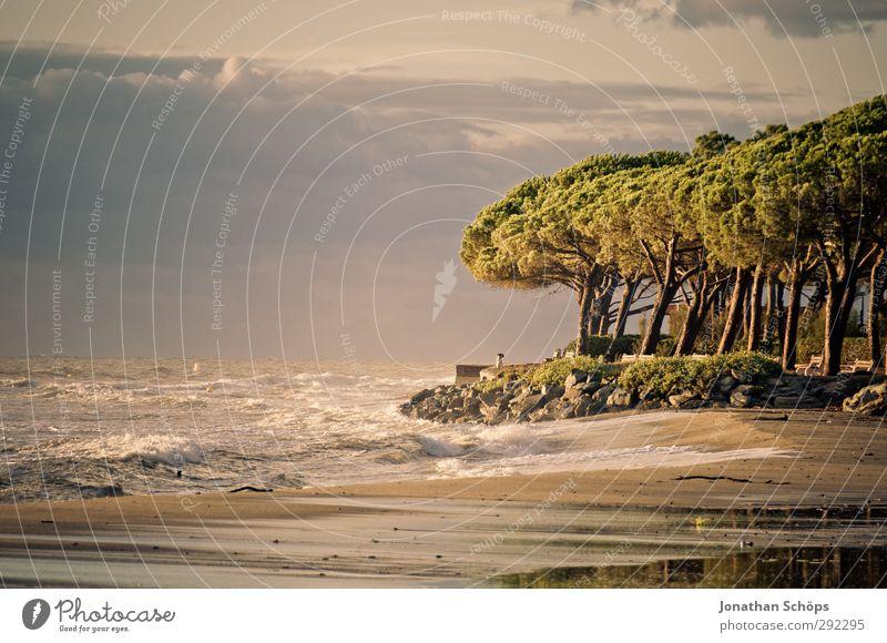 Corsica II Vacation & Travel Freedom Summer Summer vacation Sunbathing Beach Ocean Island Waves Environment Nature Landscape Joie de vivre (Vitality) Tree