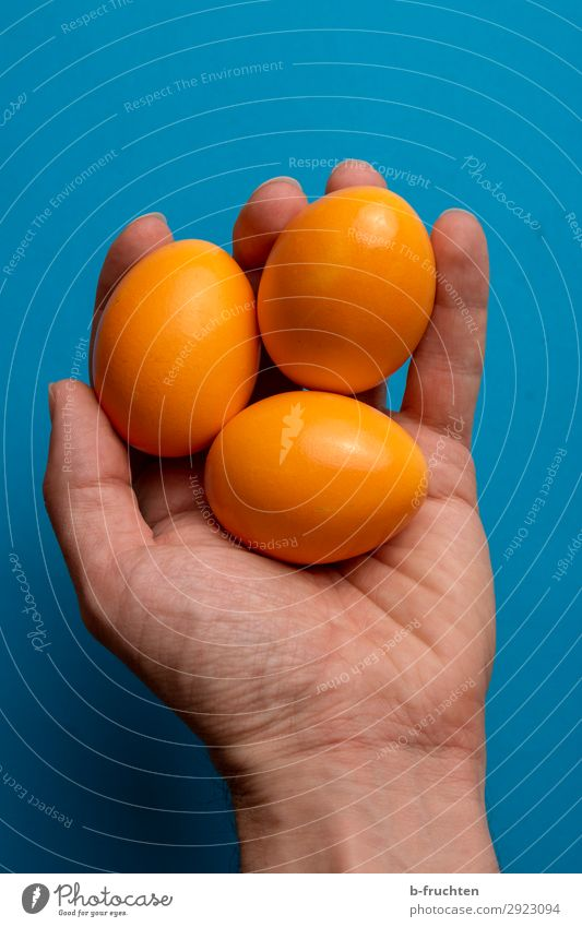 Three Easter eggs in your hand Food Organic produce Healthy Eating Feasts & Celebrations Man Adults Hand Fingers Select Touch To hold on Fresh Blue Orange 3