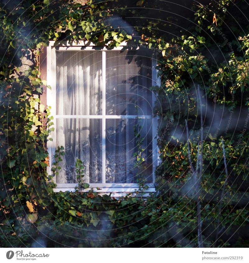 Old houses room with view... Environment Nature Plant Beautiful weather Ivy Leaf House (Residential Structure) Detached house Window Bright Natural