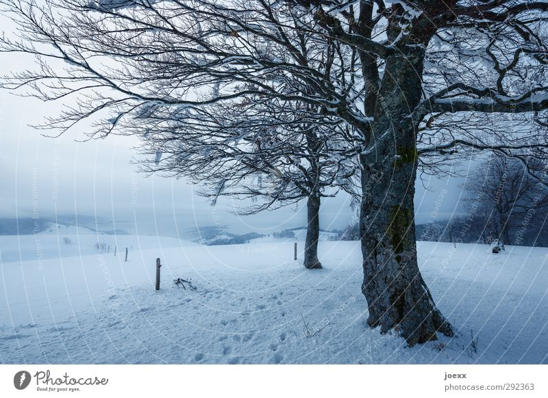 valley view Landscape Sky Winter Weather Bad weather Tree Mountain Cold Blue Black White Idyll Schauinsland Colour photo Subdued colour Exterior shot Deserted