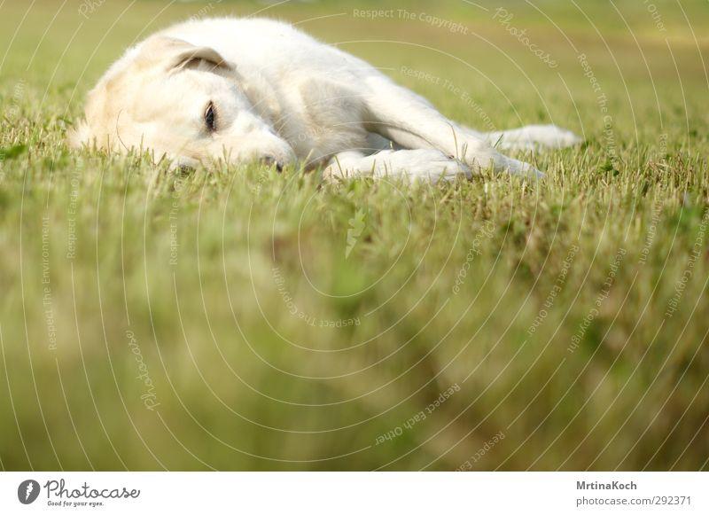 Dog Nature White Summer Plant Animal Landscape Environment Meadow Autumn Grass Spring Garden Lie Park Field