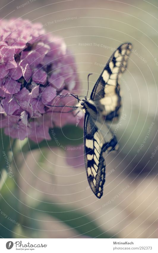 butterfly. Environment Nature Plant Animal Spring Summer Beautiful weather Bushes Blossom Garden Wild animal Butterfly 1 Insect Swallowtail Yellow Fresh