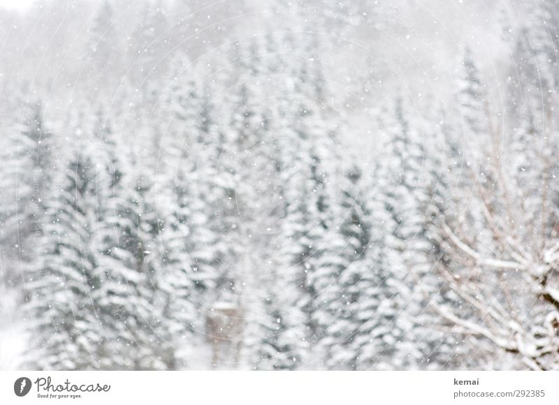 White splendour Environment Nature Landscape Winter Ice Frost Snow Snowfall Tree Spruce Fir tree Forest Hill Bright Cold Winter light Colour photo