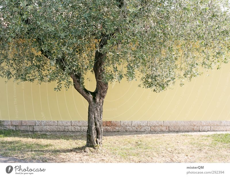 Yellow Tree. Art Esthetic Olive tree Green Leaf Tree trunk Olive leaf Wall (barrier) Mediterranean Italy Colour photo Subdued colour Exterior shot Detail