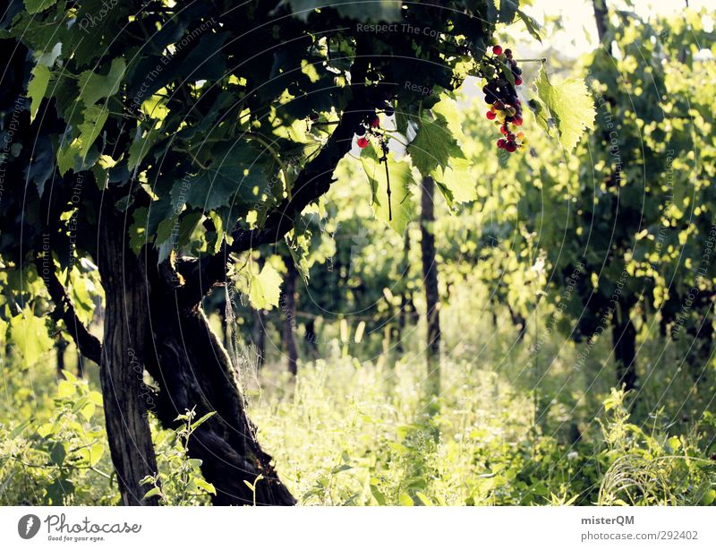 Vineyard. Environment Nature Landscape Plant Esthetic Wine Bunch of grapes Wine growing Grape harvest Winery Green Italy Colour photo Subdued colour