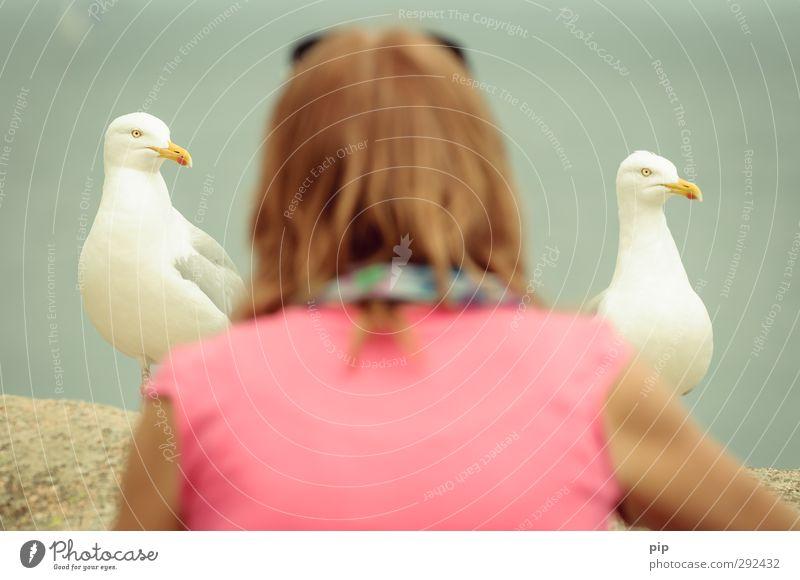 between seagulls Wild animal Seagull Beak 2 Animal Curiosity Bird Subdued colour Detail Looking into the camera
