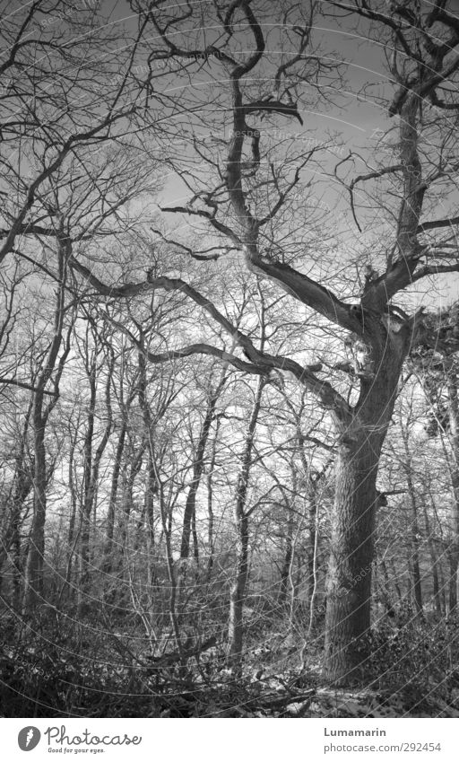 Nature Old Plant Tree Animal Winter Landscape Calm Forest Dark Cold Senior citizen Sadness Wood Time Moody