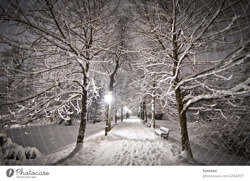 winter hiking Winter Snow Snowfall Tree Park Graz Lanes & trails Freeze Cold Brown Gray White Park bench Lantern Snow track Snowscape Snow layer Exterior shot