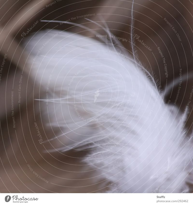 gossamer Nature Wind Bird Wing Feather Small Soft White Attentive Ease Smooth Easy Delicate Pennate Angel Guardian angel Hover Downy feather Fine Velvety