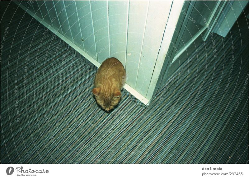 cat comes Room Pet Cat 1 Animal Exceptional Whimsical Irritation Colour photo Interior shot Deserted Flash photo Bird's-eye view Animal portrait
