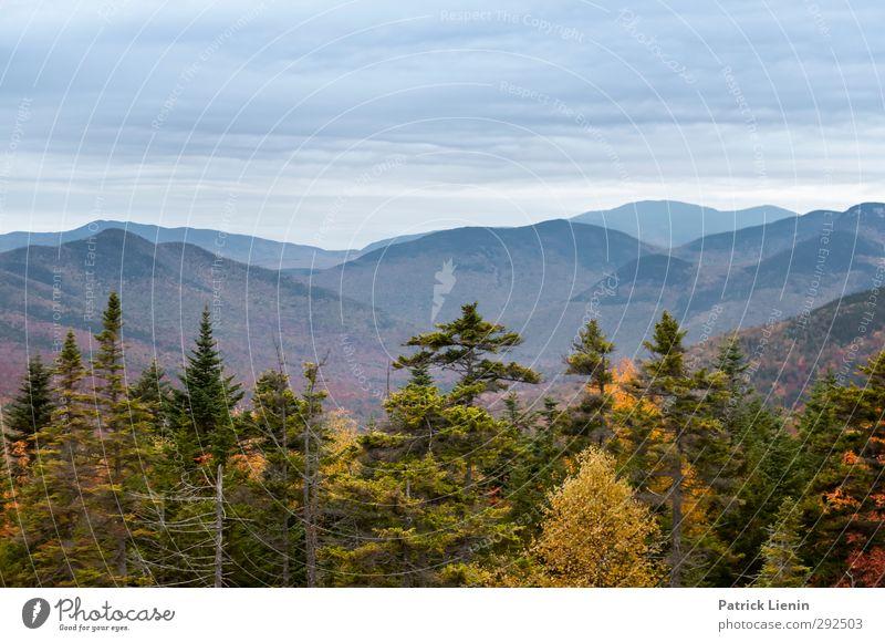 Nature Vacation & Travel Plant Landscape Environment Autumn Climate Contentment Elements Foliage plant