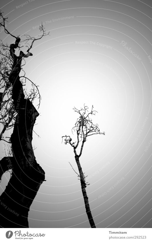 Sky Nature White Tree Winter Black Environment Emotions Gray Esthetic Simple Relationship Affection