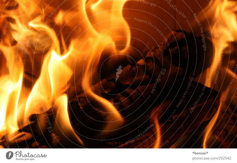 fuego! Elements Fire Movement Glittering Illuminate Aggression Esthetic Threat Hot Bright Warmth Wild Yellow Orange Euphoria Warm-heartedness Timidity Power