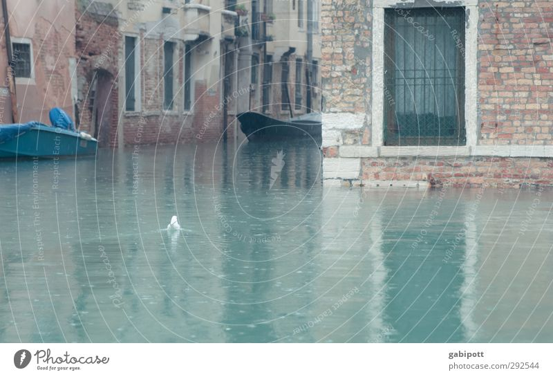 and the rain fell Rain Rain fell Venice Gray Torrents of water Channel Water Deluge Swimming & Bathing Watercraft Wet Cold Colour photo Subdued colour