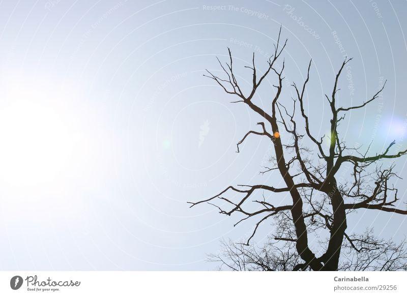 light Back-light Tree Light Sun Reflection Sky Tree trunk Branch