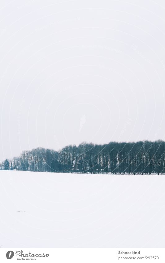 WINTER II Environment Nature Landscape Elements Earth Sky Winter Ice Frost Snow Snowfall Tree Bushes Wild plant Meadow Field Forest Beautiful Air Row of trees