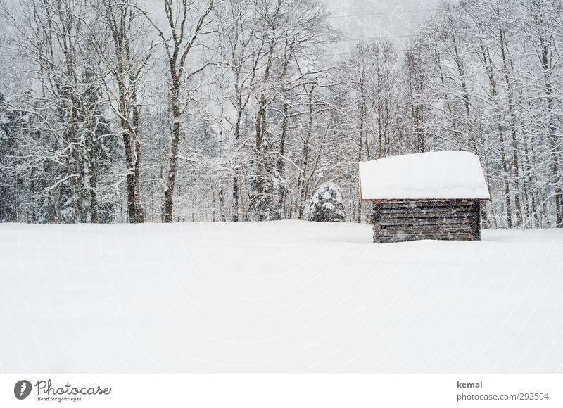 February snow Environment Nature Landscape Plant Winter Ice Frost Snow Snowfall Tree Meadow Hut Fresh Bright Cold Small White Deep snow Subdued colour