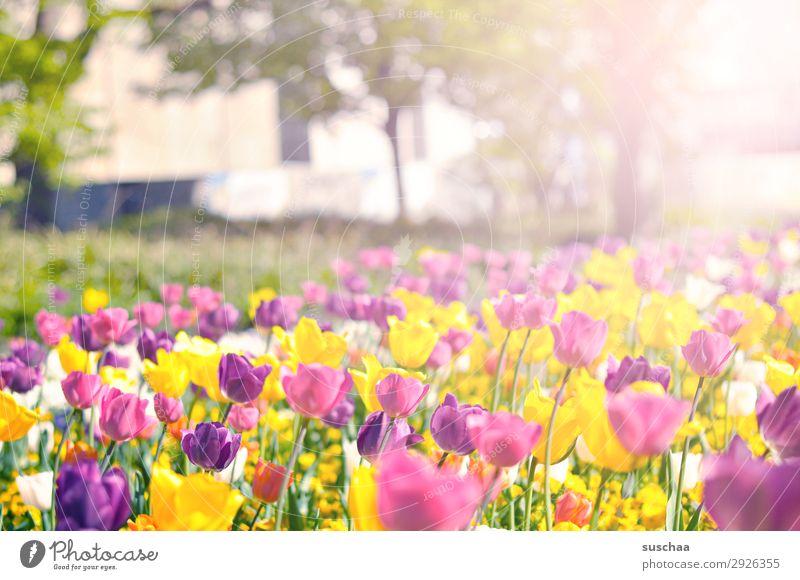 Nature Summer Plant Landscape Flower Warmth Environment Blossom Spring Meadow Garden Park Weather Happiness Joie de vivre (Vitality) Beautiful weather