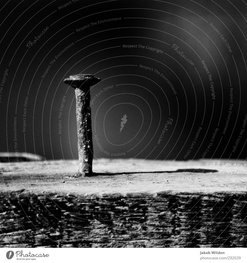 Rusty Nail Environment Nature Water Beautiful weather Wood Metal Dry Town Gray Black & white photo Exterior shot Experimental Pattern Structures and shapes