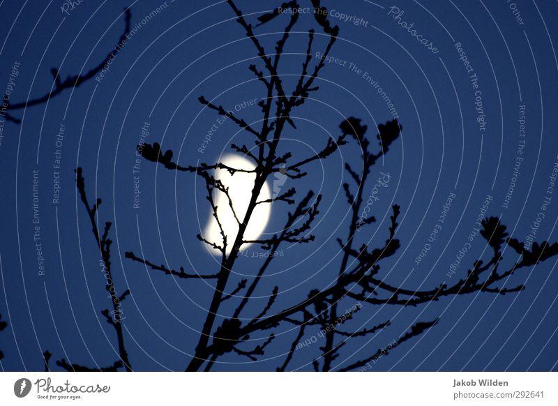 Sky Nature Landscape Environment Autumn Earth Cloudless sky Moon Anticipation Night sky