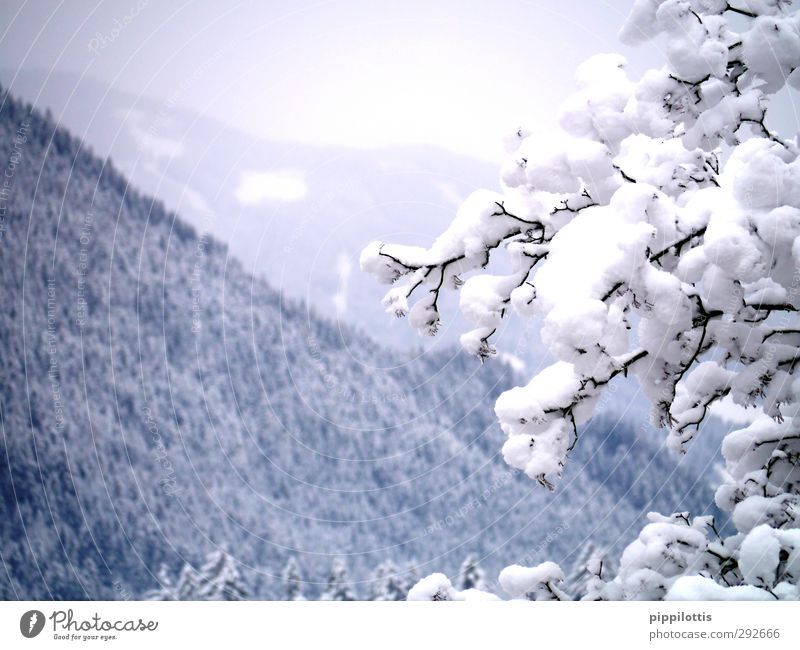 Nature Blue Beautiful White Tree Winter Landscape Forest Far-off places Mountain Cold Snow Gray Healthy Natural Ice