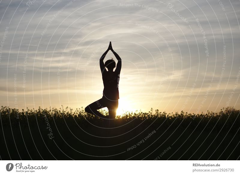 Yoga at sunset Sports Fitness Sports Training Human being Feminine Young woman Youth (Young adults) 1 30 - 45 years Adults Environment Nature Landscape Sky Sun
