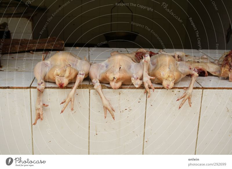 Animal Naked Wall (building) Death Wall (barrier) Lie Bird Food Group of animals Bizarre Meat Disgust Marketplace Barn fowl Farm animal Chicken