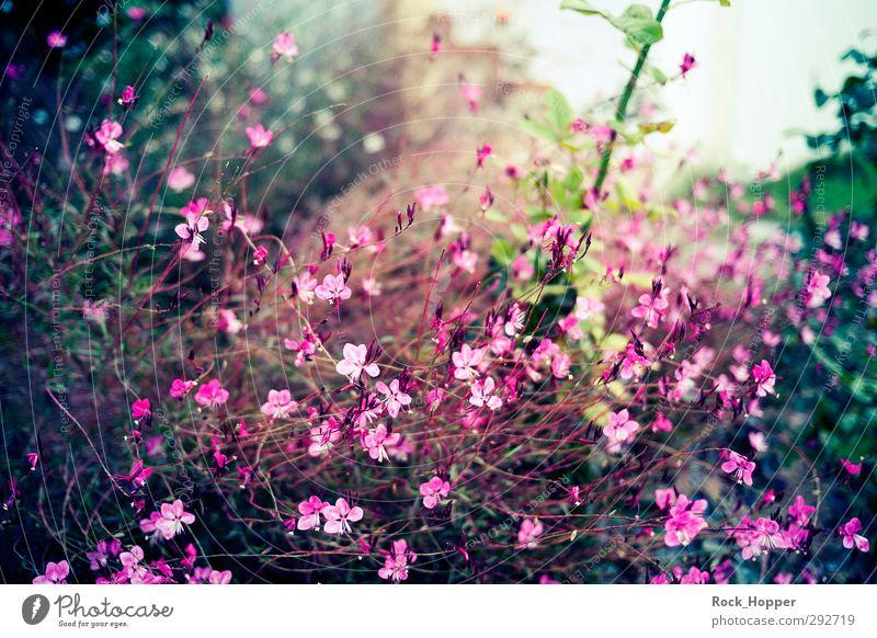 Green Plant Ocean Flower Landscape Calm Relaxation Environment Autumn Garden Brown Park Pink Beautiful weather Bushes Summer vacation