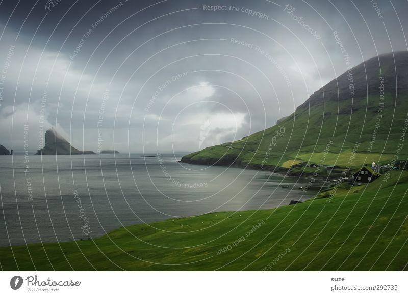 Sky Nature Green Water Ocean Animal Clouds Landscape Environment Dark Mountain Cold Coast Rock Horizon Exceptional