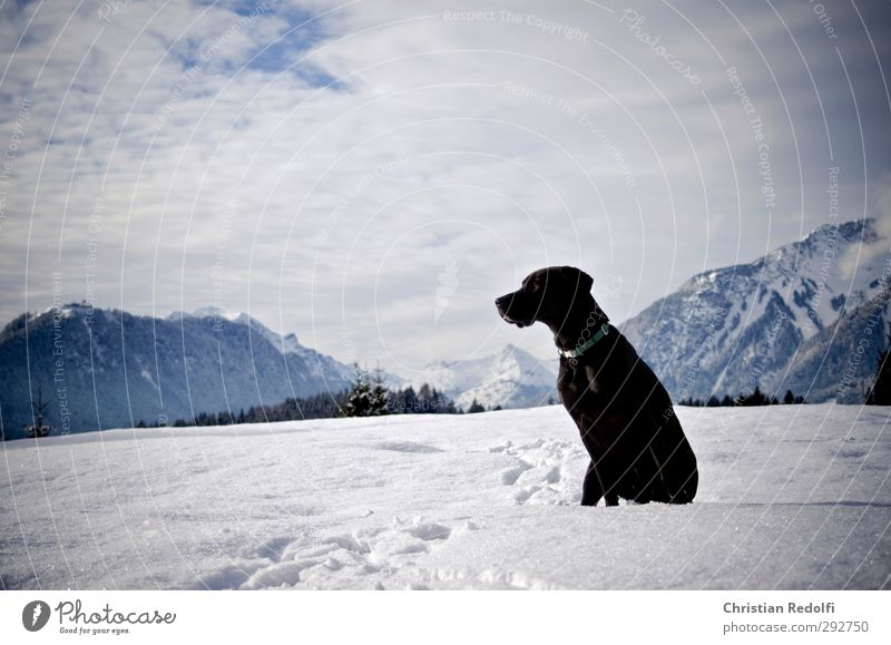 stroll Playing Trip Winter Snow Mountain Hiking Nature Landscape Sky Clouds Hill Peak Snowcapped peak Animal Pet Dog Freeze Wait Force Love of animals